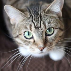 Acupetvet cat