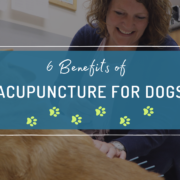 Acupuncture benefits for Dogs